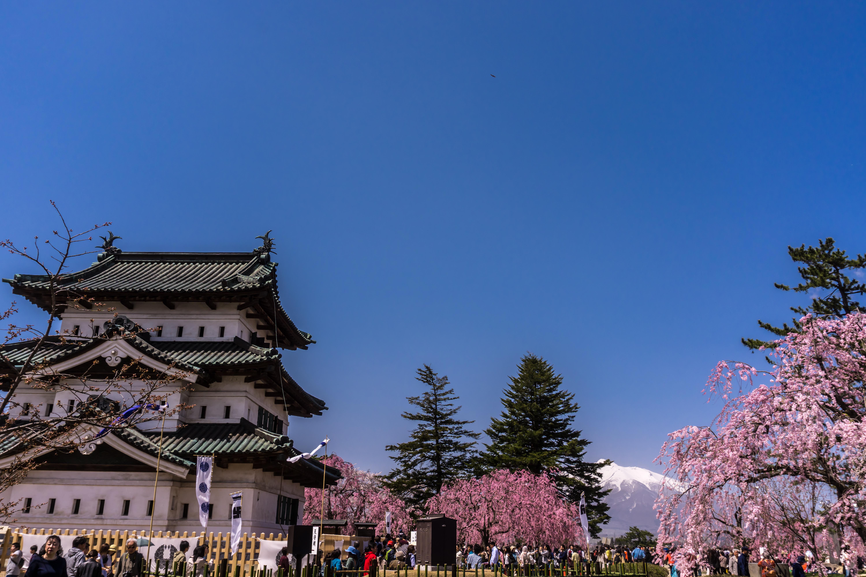 日本一の桜名所 青森県弘前市 弘前公園 弘前城と岩木山