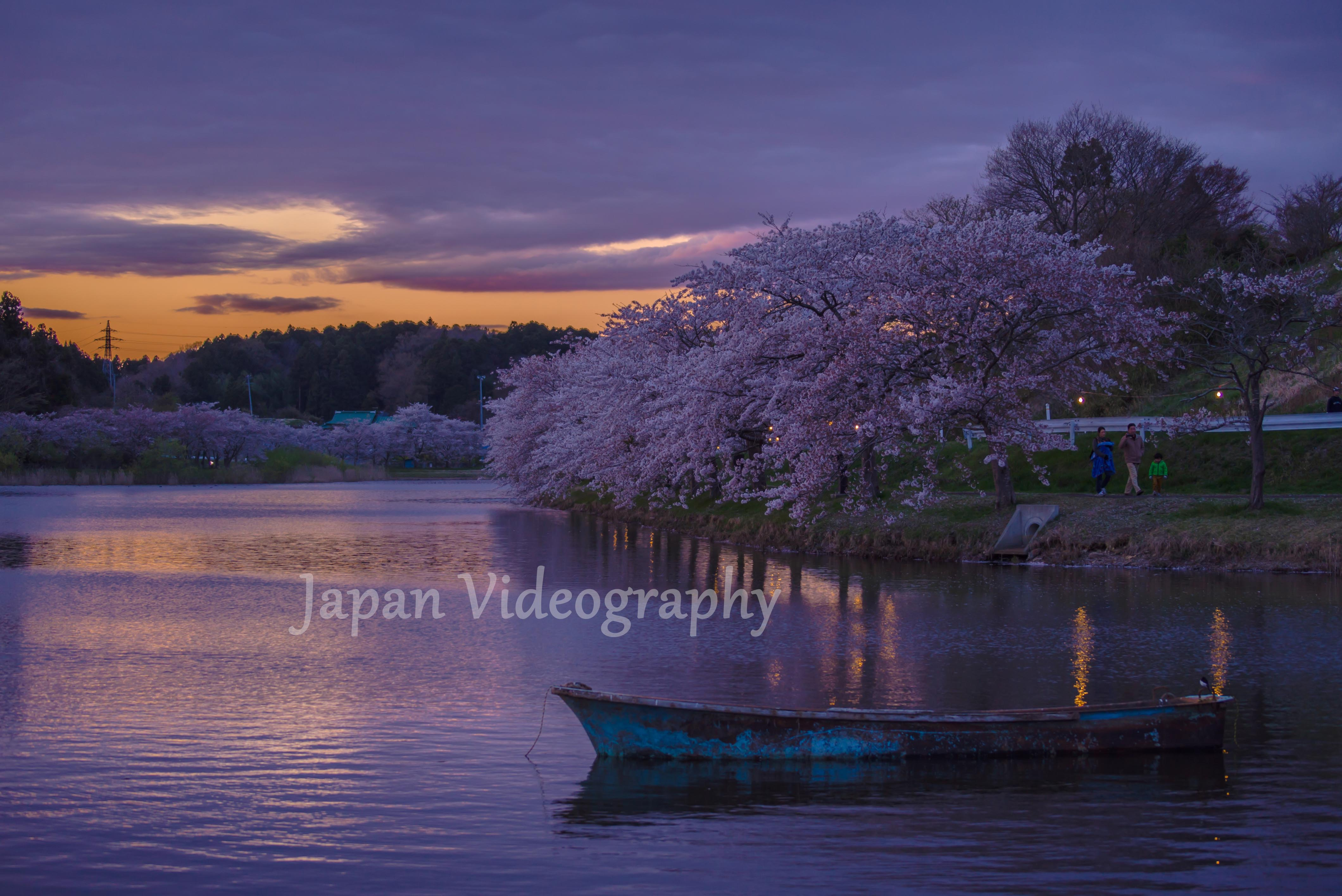 夕暮れの平筒沼-宮城県登米市のお花見スポット