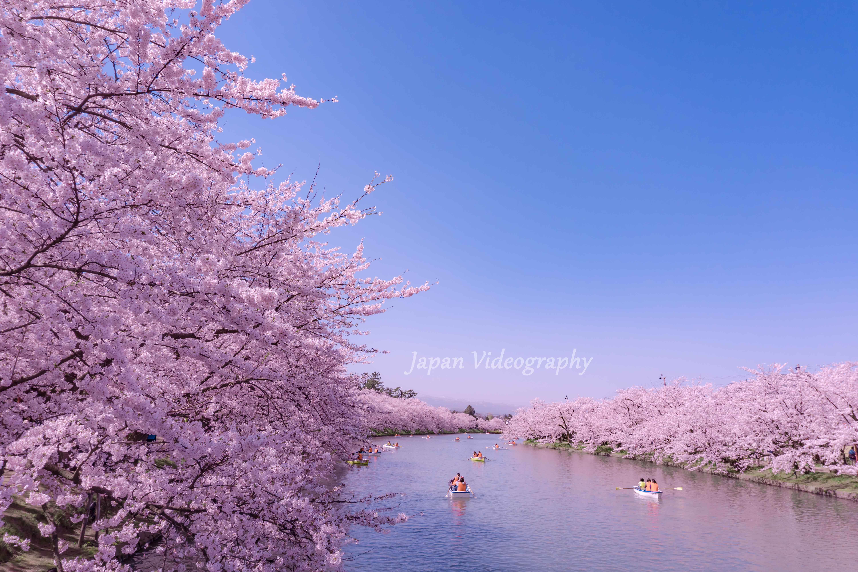 青森県弘前市のお花見スポット 弘前城 弘前公園の西濠