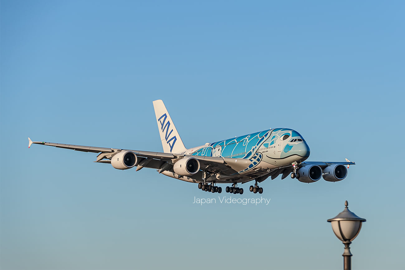 ANA A380-800 Flying Honu