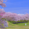 RAW現像 春の桜を美しいピンク色にレタッチ-Adobe Lightroom Classic CC