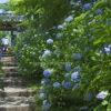 仙台のあじさい寺・資福寺を彩る1200株の紫陽花|宮城県の観光情報